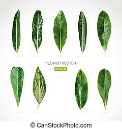 Vector image of leaves on white background