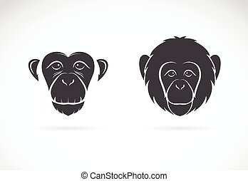 Vector image of monkey face on white background