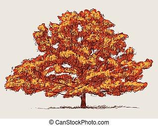 Vector image of oak tree in autumn