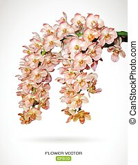 Vector image of orchid flower on white background