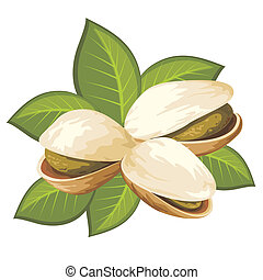 vector image of pistachio nuts with leaves