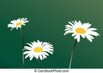 three beautiful white daisies on a green background