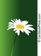 white chamomile flower on a green background