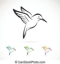 vector, imagen, de, un, colibrí, diseño, blanco, plano de...