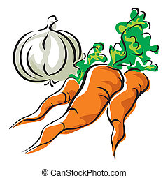 carrots and garlic - vector images of three carrots and...