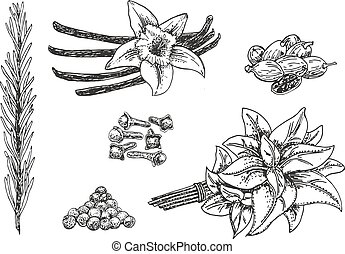 Vector ink hand drawn culinary herbs and spices set