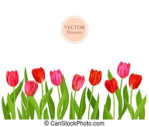 Vector Isolated tulips flowers
