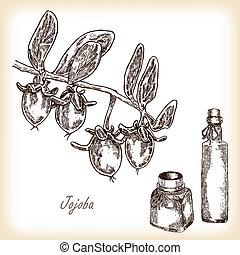 vector, jojoba, ilustración, mano, vidrio, fruta, dibujado, bottles.