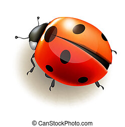 vector, ladybird., illustration.