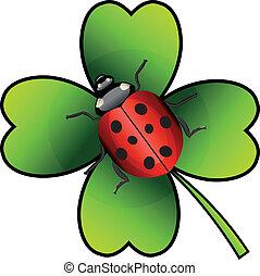 Vector ladybug on green clover. Isolation over white background.