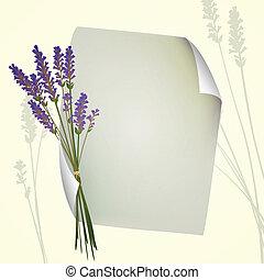 vector, lavendel, achtergrond