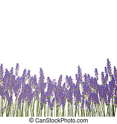 Vector Lavender Background - Vector Illustration of a...
