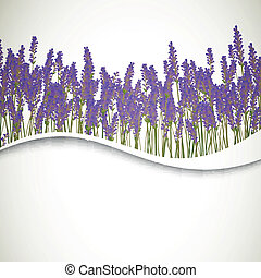 Vector Lavender Background - Vector Illustration of a ...