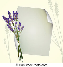 Vector Lavender Background - Vector Sheet of Paper with ...