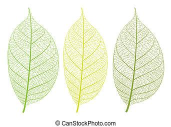 Vector leaf - Vector leaves on white background