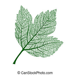 Vector leaf isolated. Natural macro leaf.