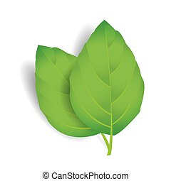 Vector leaves isolated on white