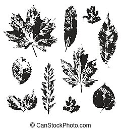 Vector leaves print set isolated