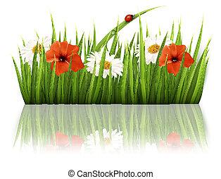 vector., lentebloemen, ladybug., achtergrond, gras