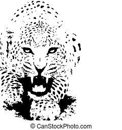 vector., levhart, čerň, ilustrace, tiger, neposkvrněný