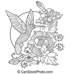 vector, libro, colorido, adultos, colibrí