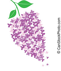 vector lilac flower