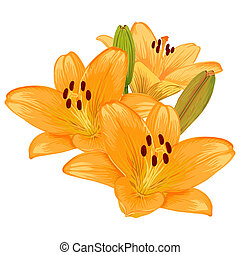Vector beautiful bouquet of orange lilies.