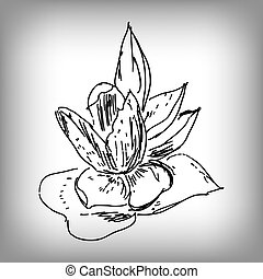 Vector lily flower. Illustration by hand. Monochrome drawing.