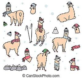 vector, lindo, lama, invierno, conjunto, sombrero, bufanda