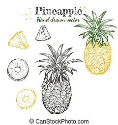 Vector line art pineapple fruits hand drawn illustration set.