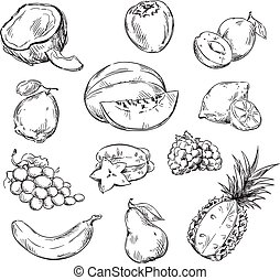 Vector line drawing of various fruits
