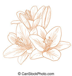vector, lirios, flowers.