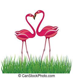 vector, love., flamenco, dos, ilustración