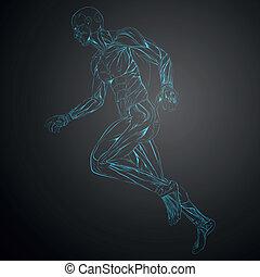 vector, músculo humano, anatomía