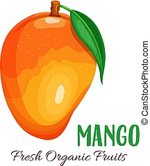 Vector mango illustration