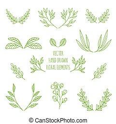 vector, mano, dibujado, elementos florales