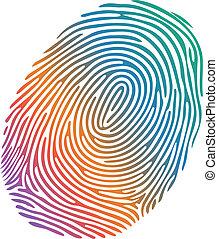 Vector many-coloured fingerprint on white background