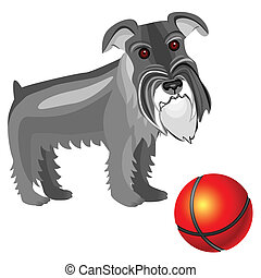 vector Miniature Schnauzer dog - dog breed Miniature ...