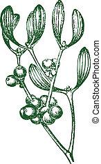 Detailed vector mistletoe graphic