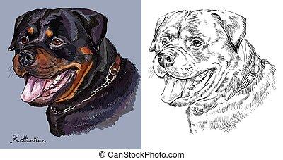 vector, monocromo, retrato, dibujo, mano, colorido, rottweiler.