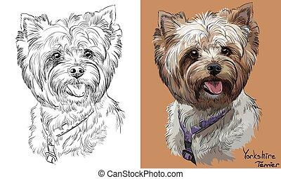 vector, monocromo, retrato, dibujo, yorkshire, mano, colorido, terrier