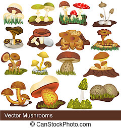 vector mushrooms - Great collection of different mushrooms,...