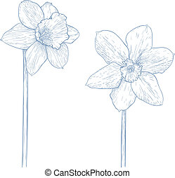 Vector narcissus. - Vector illustration with narcissus in ...