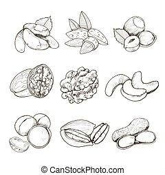 vector nuts set