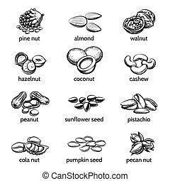Vector nuts set. Peanut and hazelnut, seed and walnut,...
