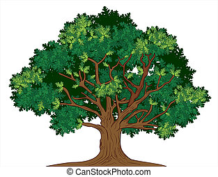 Vector oak tree - Vector illustration of old green oak tree