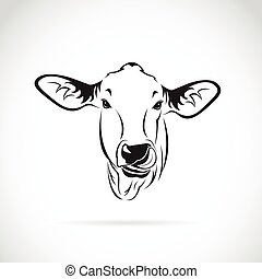 Vector of a cow head on white background., Calf
