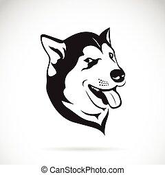Vector of a dog siberian husky on white background.