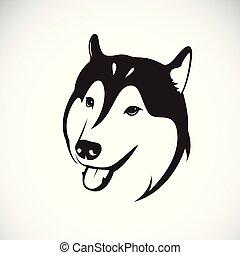Vector of a dog siberian husky on white background. Pet. Animal.