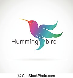 Vector of a hummingbird design on a white background. Animals.